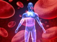 Кровь в организме человека