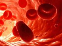 Эритроциты в сосудах
