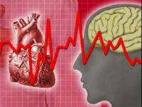 Сердце, головной мозг и ЭКГ
