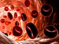Эритроциты внутри сосуда