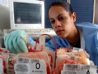 Врач выбирает пакет с донорской кровью