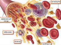 Кровяные клетки