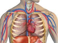 Подключичная артерия