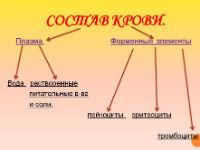 Схема состава крови