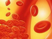 Эритроциты внутри кровеносного капилляра