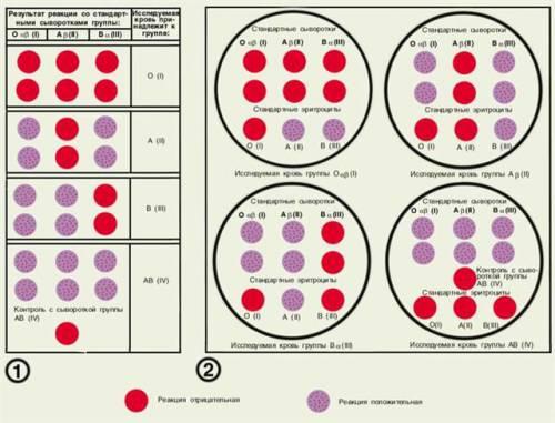 3 положительная группа крови