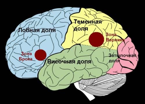 Речевые центры головного мозга