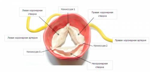Аортальный клапан
