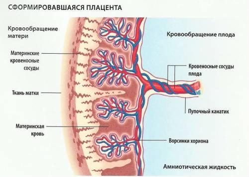 Нмпк 1 а степени при беременности