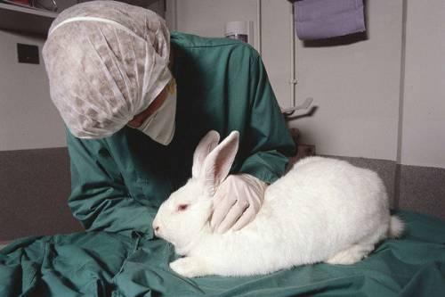 Подопытный кролик