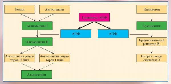 Схема действия Капотена при повышенном давлении