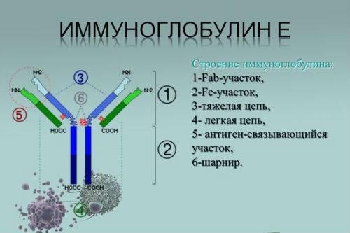 Как называется анализ крови на аллергены