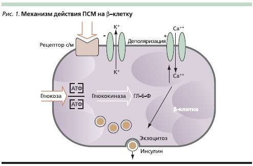 Механизм действия ПСМ на клетке