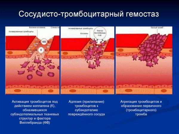Фазы первичного гемостаза