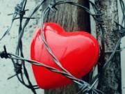 Сердце запуталось в колючей проволоке