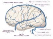 Вены головного мозга